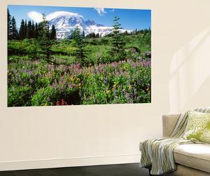 Subalpine Meadow, Mount Rainier National Park, Washington, USA by Adam Jones