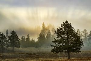Sunbeams over trees, Midway Geyser Basin, Yellowstone National Park, Wyoming by Adam Jones
