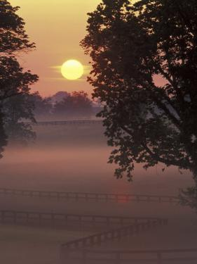Sunrise on Horse Rarm, Lexington, Kentucky, USA by Adam Jones