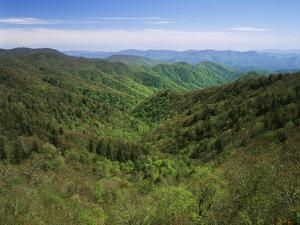 Thomas Divide, Great Smoky Mountains National Park, North Carolina, USA by Adam Jones