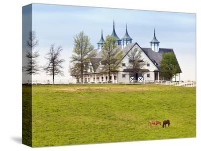 Thoroughbred Horses Grazing, Manchester Horse Farm, Lexington, Kentucky, Usa by Adam Jones