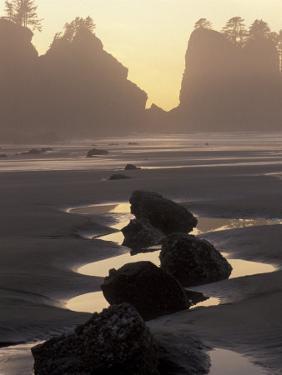 Tidepools and Seastacks, Shi Shi Beach, Olympic National Park, Washington, USA by Adam Jones