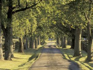 Tree-Lined Driveway, Bluegrass Region, Lexington, Kentucky, USA by Adam Jones