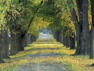 Tree-Lined Road in Autumn, Louisville, Kentucky, USA by Adam Jones