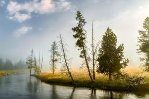Trees and mist at sunrise along Firehole River, Yellowstone National Park, Wyoming by Adam Jones