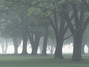 Trees in Fog, Louisville, Kentucky, USA by Adam Jones
