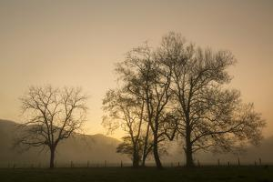 Trees Silhouetted at Sunrise, Cades Cove, Great Smoky Mountains, National Park, Tennessee by Adam Jones