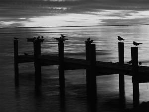 View of Birds on Pier at Sunset, Fort Myers, Florida, USA by Adam Jones