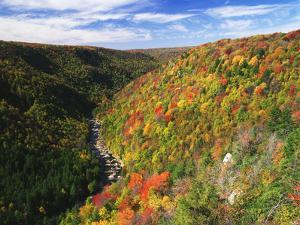 View of Blackwater Canyon in Autumn, Blackwater Falls State Park, West Virginia, USA by Adam Jones