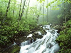 View of Cove Creek Covered with Fog, Pisgah National Forest, North Carolina, USA by Adam Jones