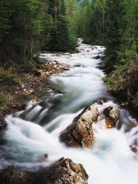 View of Crystal River Colorado, Gunnison National Forest, Colorado, USA by Adam Jones