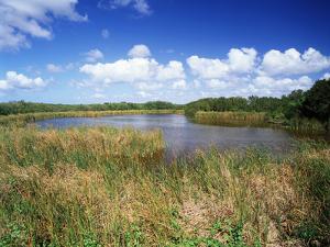 View of Eco Pond, Everglades National Park, Florida, USA by Adam Jones