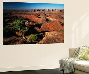 View of Gooseneck and Dead Horse Point, Dead Horse Point State Park, Utah, USA by Adam Jones