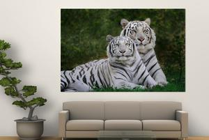 White Phase of the Bengal Tiger by Adam Jones