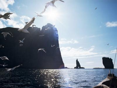 Faroe Islands, Denmark, North Atlantic by Adam Woolfitt
