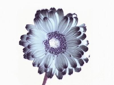 Irridescent Flower