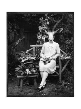 Adelaide Gazelling