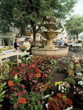 Fountain and Flower Market, Place Aux Aires, Grasse, Alpes-Maritimes, Provence, France by Adina Tovy