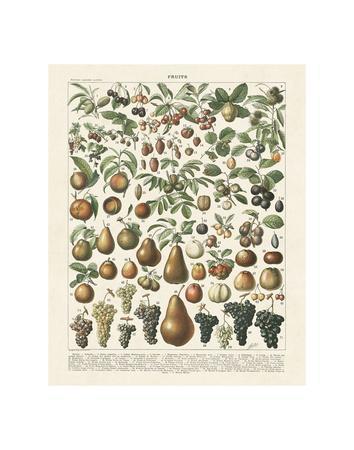Fruits II