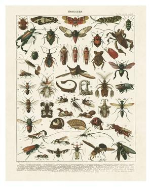 Insectes I by Adolphe Millot
