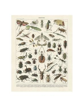 Insectes II by Adolphe Millot