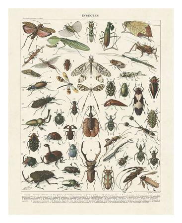 Insectes II