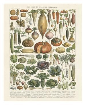 Legumes II by Adolphe Millot