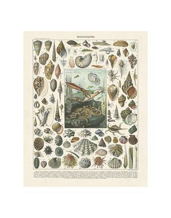 Mollosques II