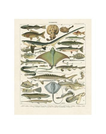 Poissons II by Adolphe Millot