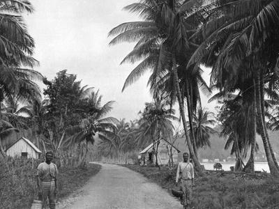 Coconut Grove, Port Antonio, Jamaica, C1905
