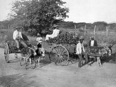 Wood Carts, Jamaica, C1905