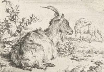 Lying goat, 1670 by Adriaen van de Velde