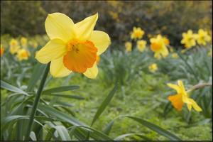 Focusing on Spring by Adrian Campfield