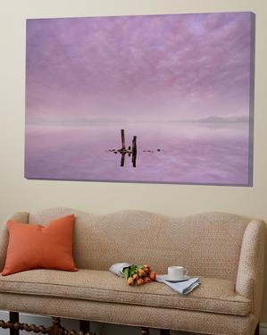 Minimalistic Dawn by Adrian Campfield
