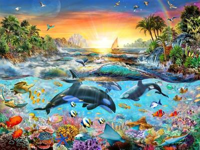 Orca Paradise