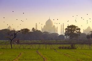 Birds Take Flight near Taj Mahal by Adrian Pope