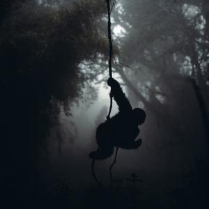 Mountain Gorilla Hanging on Vine by Adrian Warren