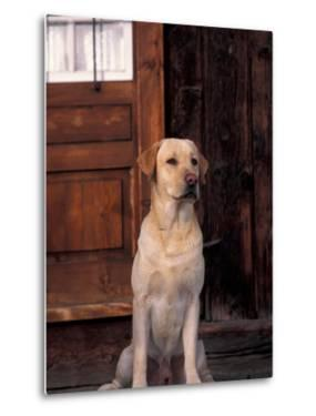 Yellow Labrador Retriever Sitting in Front of a Door by Adriano Bacchella