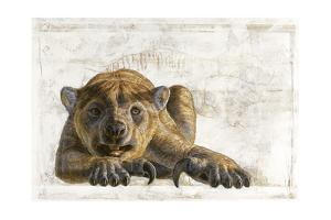 A Marsupial Lion, Thylacoleo Carnifex by Adrie and Alfons Kennis