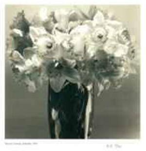 Daffodils by Adriene Veninger