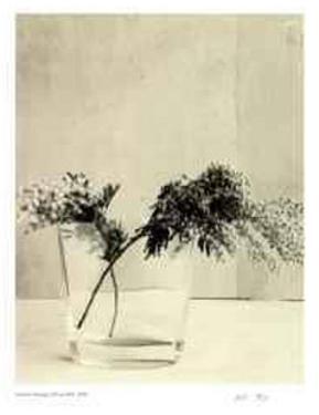 Floral #11 by Adriene Veninger