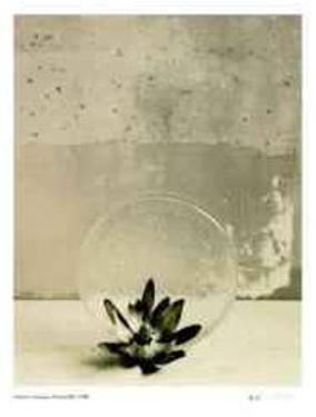 Floral #12 by Adriene Veninger