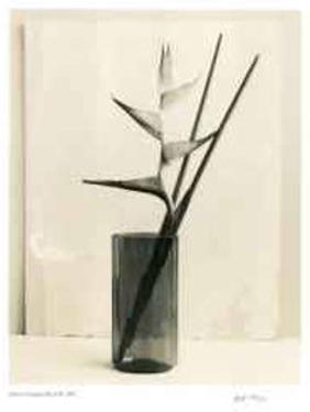Floral #7 by Adriene Veninger