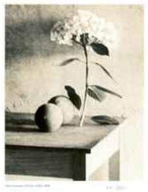 Still Life on Table by Adriene Veninger