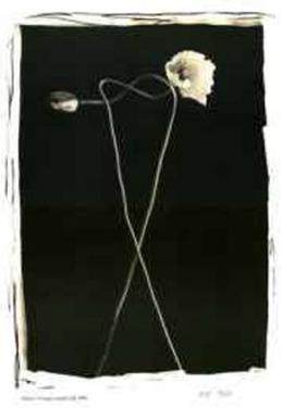 Untitled II by Adriene Veninger