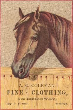 Advertisement with Horse