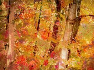 Fall Forest by Advocate Art