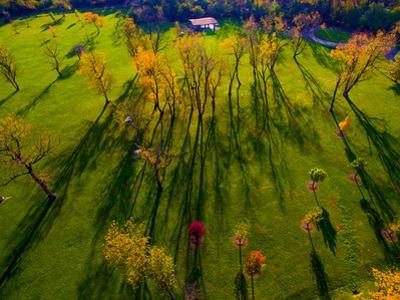 Aerial view of autumn trees, Forest Preserve, Fall Foliage, Cook County, Illinois, USA