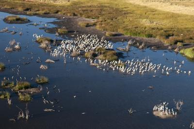 https://imgc.allpostersimages.com/img/posters/aerial-view-of-great-white-pelicans-pelecanus-onocrotalus-okavango-delta-botswana-africa_u-L-PQ8SAZ0.jpg?p=0