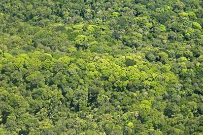 https://imgc.allpostersimages.com/img/posters/aerial-view-of-pristine-rainforest-canopy-guyana-south-america_u-L-PWFSDC0.jpg?p=0